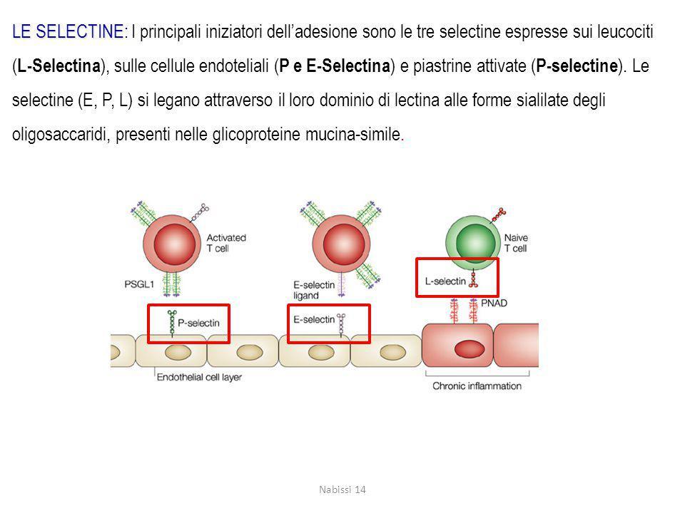 LE SELECTINE: I principali iniziatori dell'adesione sono le tre selectine espresse sui leucociti (L-Selectina), sulle cellule endoteliali (P e E-Selectina) e piastrine attivate (P-selectine). Le selectine (E, P, L) si legano attraverso il loro dominio di lectina alle forme sialilate degli oligosaccaridi, presenti nelle glicoproteine mucina-simile.