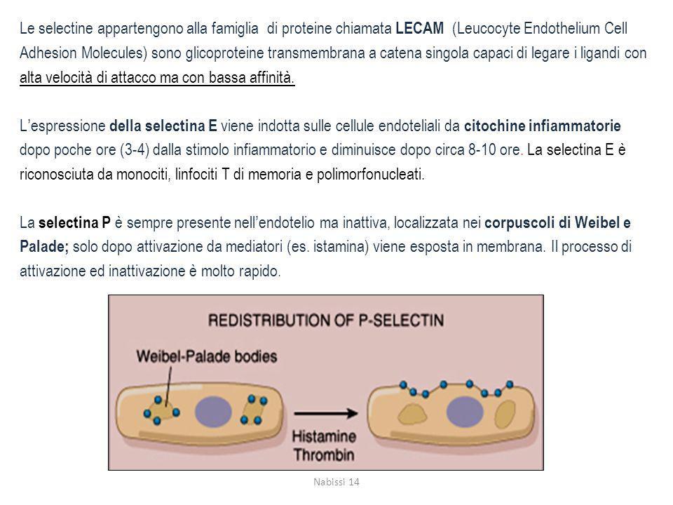 Le selectine appartengono alla famiglia di proteine chiamata LECAM (Leucocyte Endothelium Cell Adhesion Molecules) sono glicoproteine transmembrana a catena singola capaci di legare i ligandi con alta velocità di attacco ma con bassa affinità. L'espressione della selectina E viene indotta sulle cellule endoteliali da citochine infiammatorie dopo poche ore (3-4) dalla stimolo infiammatorio e diminuisce dopo circa 8-10 ore. La selectina E è riconosciuta da monociti, linfociti T di memoria e polimorfonucleati. La selectina P è sempre presente nell'endotelio ma inattiva, localizzata nei corpuscoli di Weibel e Palade; solo dopo attivazione da mediatori (es. istamina) viene esposta in membrana. Il processo di attivazione ed inattivazione è molto rapido.