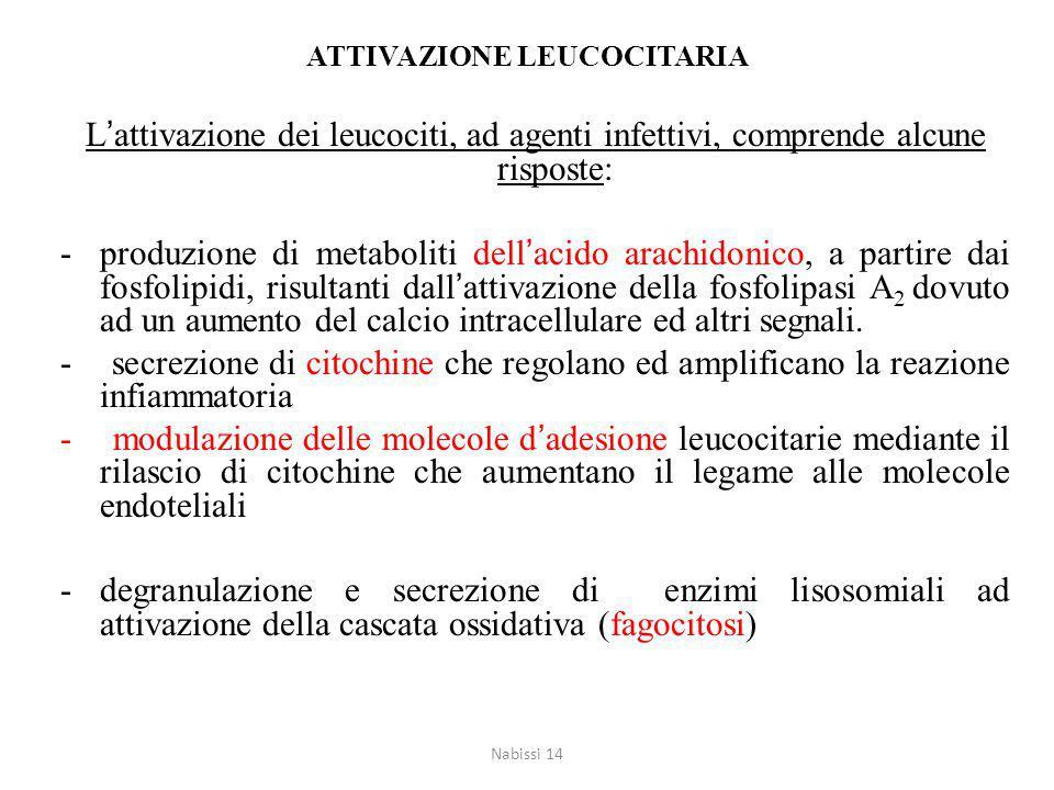 ATTIVAZIONE LEUCOCITARIA