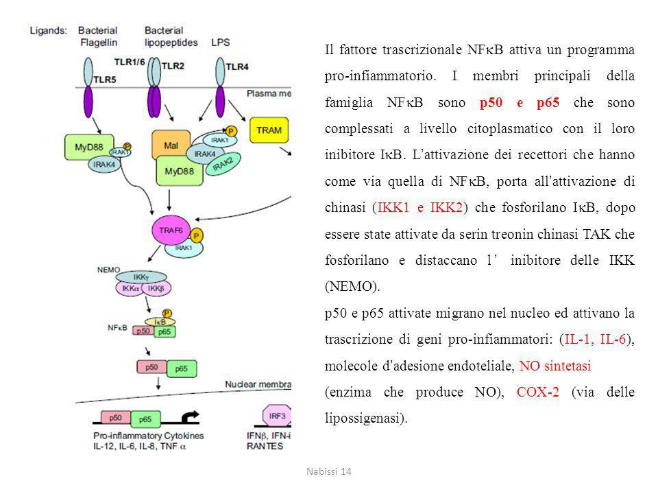 (enzima che produce NO), COX-2 (via delle lipossigenasi).