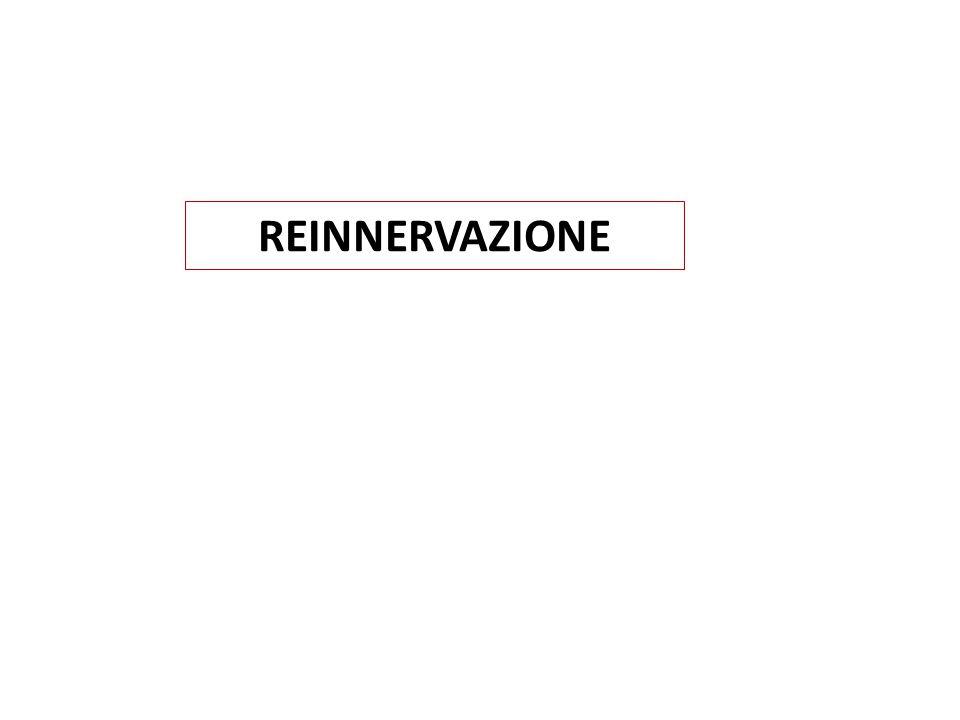 REINNERVAZIONE