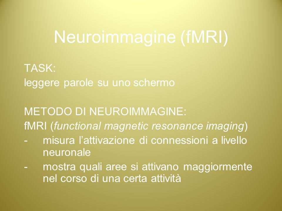 Neuroimmagine (fMRI) TASK: leggere parole su uno schermo