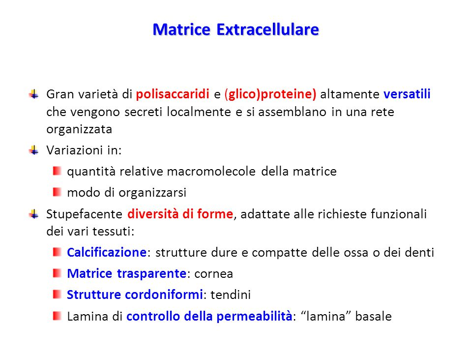 Matrice Extracellulare