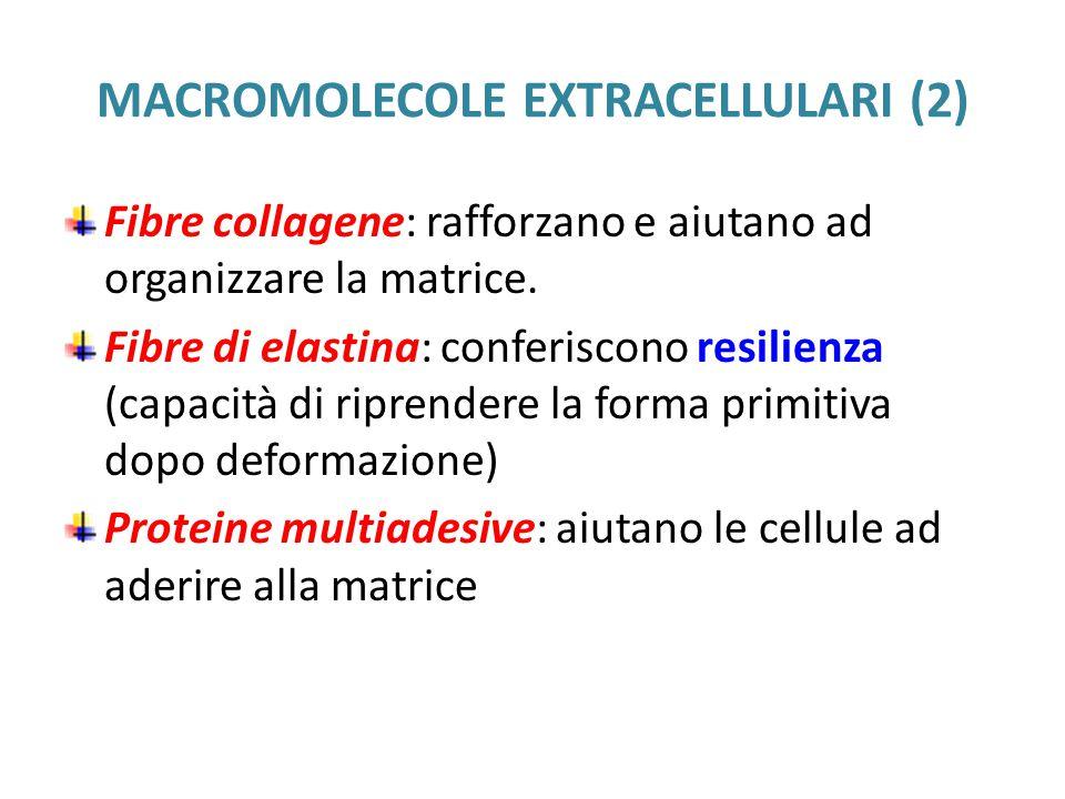 MACROMOLECOLE EXTRACELLULARI (2)