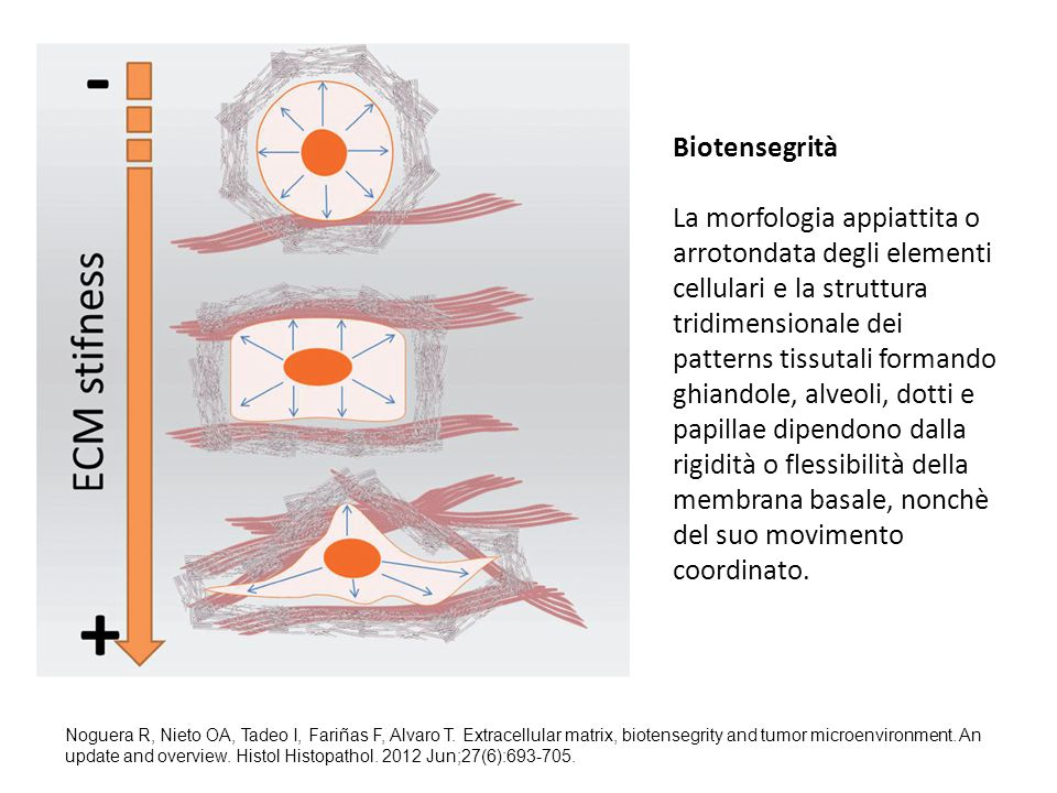 Biotensegrità