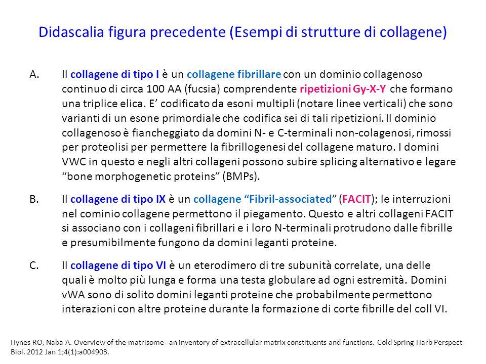 Didascalia figura precedente (Esempi di strutture di collagene)