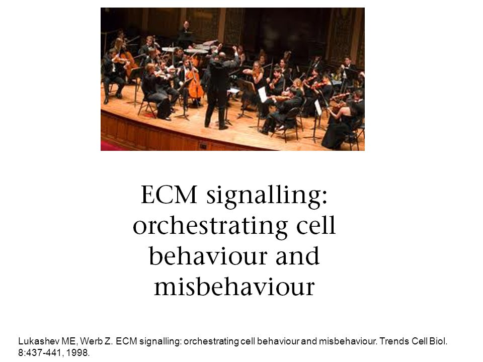 Lukashev ME, Werb Z. ECM signalling: orchestrating cell behaviour and misbehaviour.