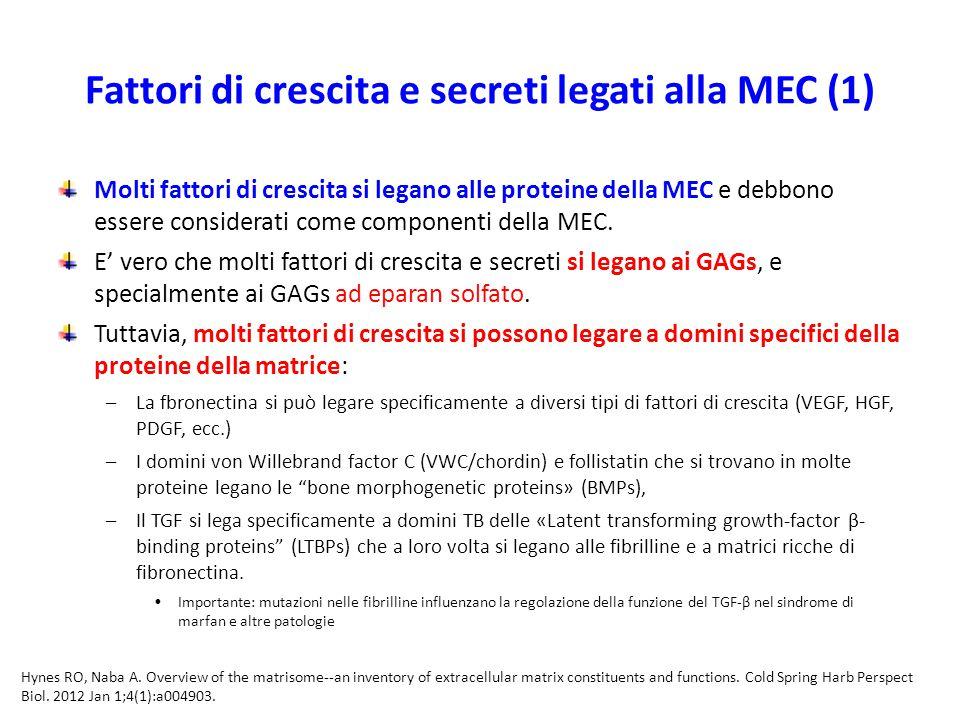 Fattori di crescita e secreti legati alla MEC (1)
