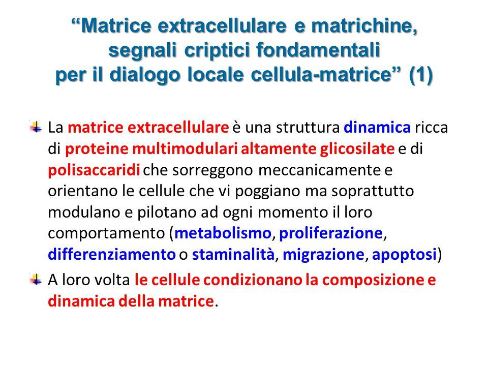 Matrice extracellulare e matrichine, segnali criptici fondamentali per il dialogo locale cellula-matrice (1)
