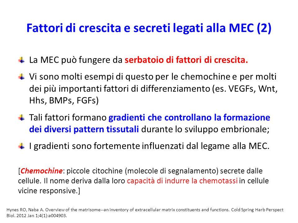 Fattori di crescita e secreti legati alla MEC (2)