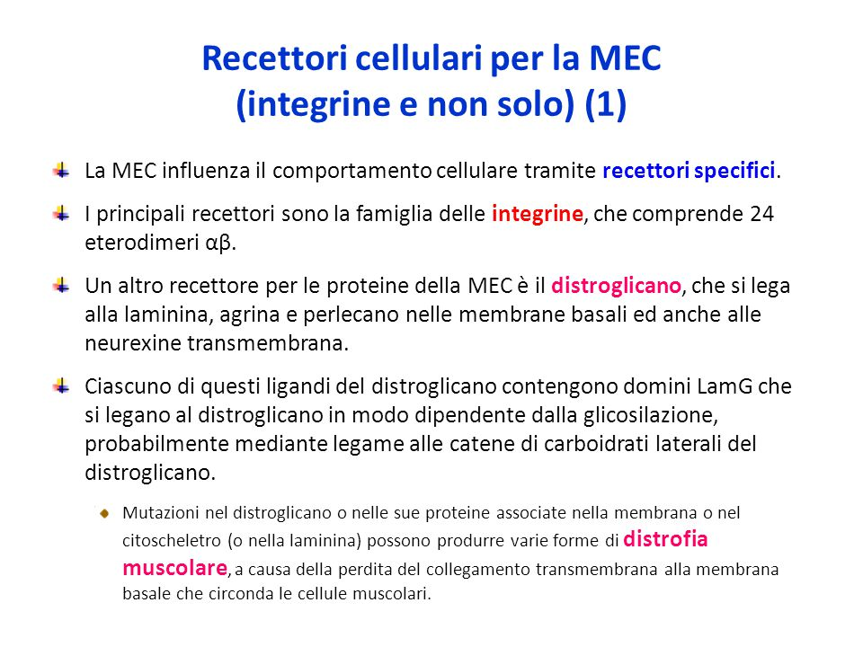Recettori cellulari per la MEC (integrine e non solo) (1)