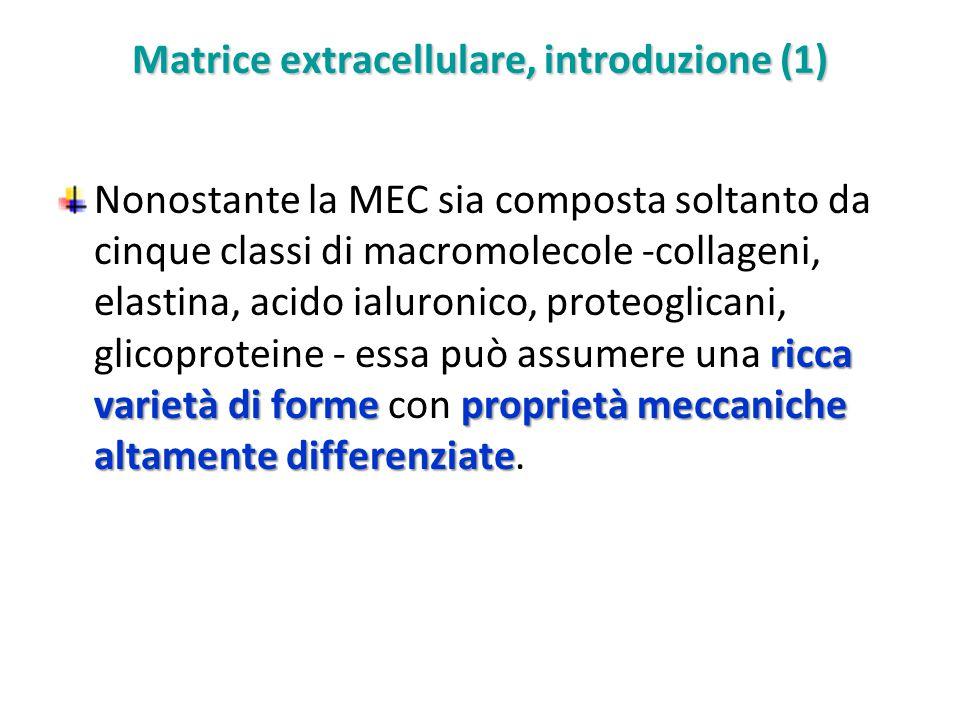 Matrice extracellulare, introduzione (1)