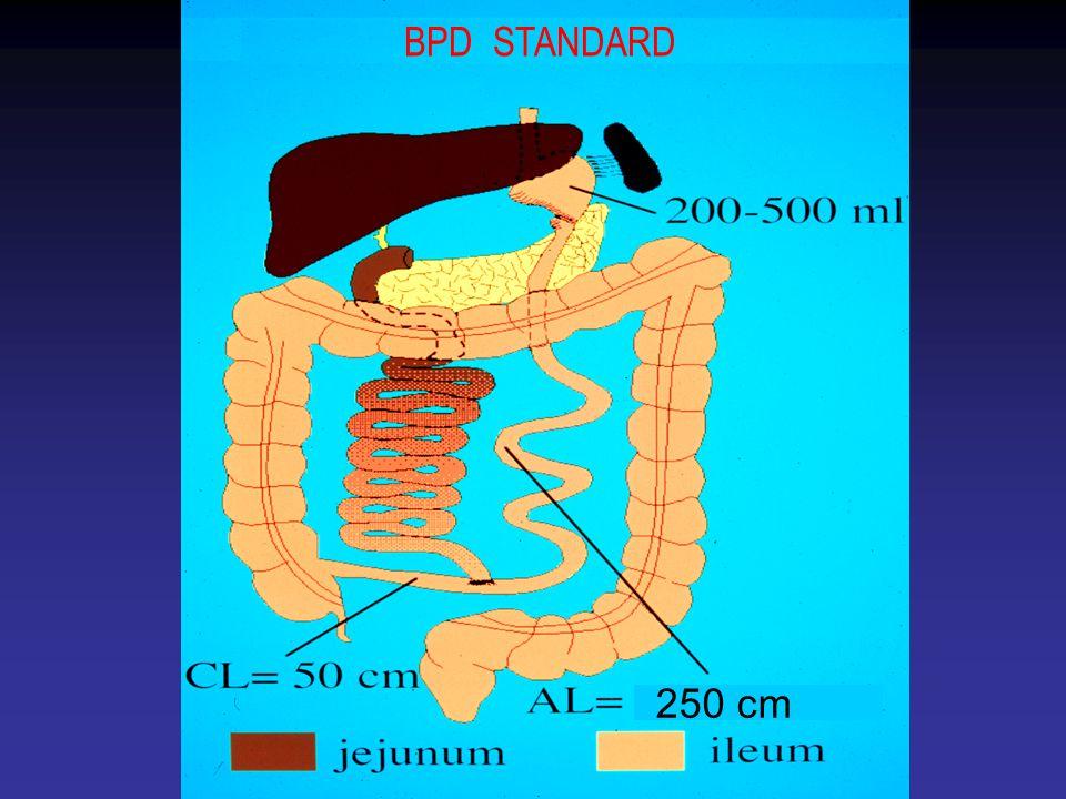 BPD STANDARD 250 cm