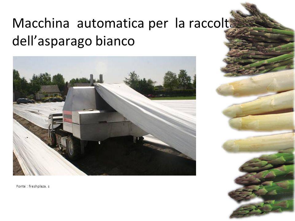 Macchina automatica per la raccolta dell'asparago bianco