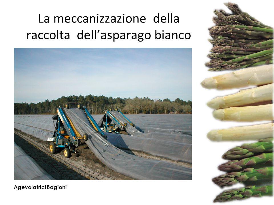 La meccanizzazione della raccolta dell'asparago bianco