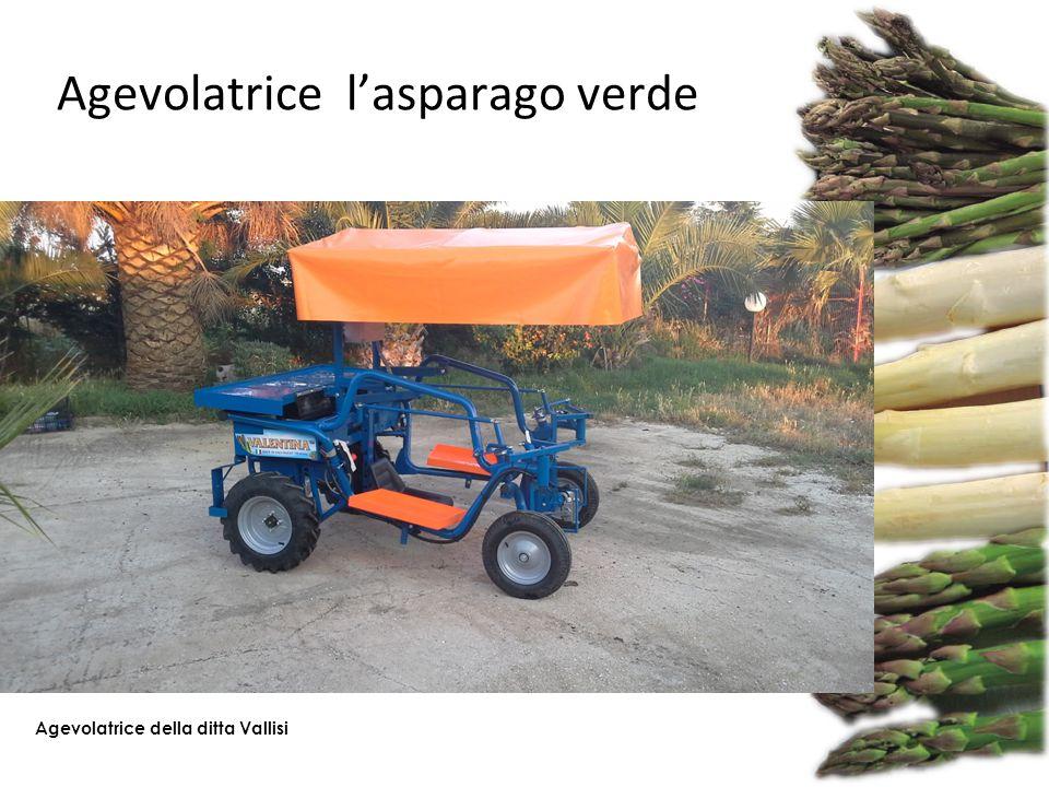 Agevolatrice l'asparago verde