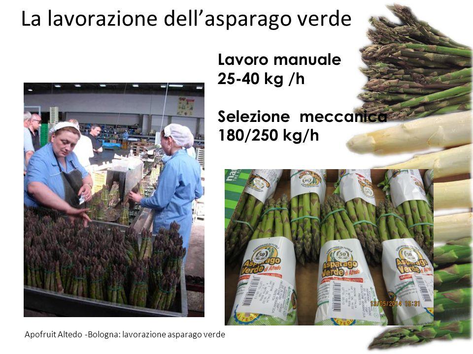 La lavorazione dell'asparago verde