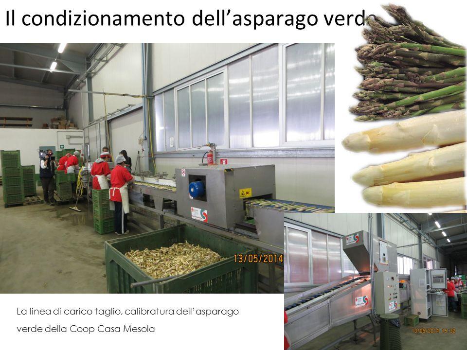 Il condizionamento dell'asparago verde