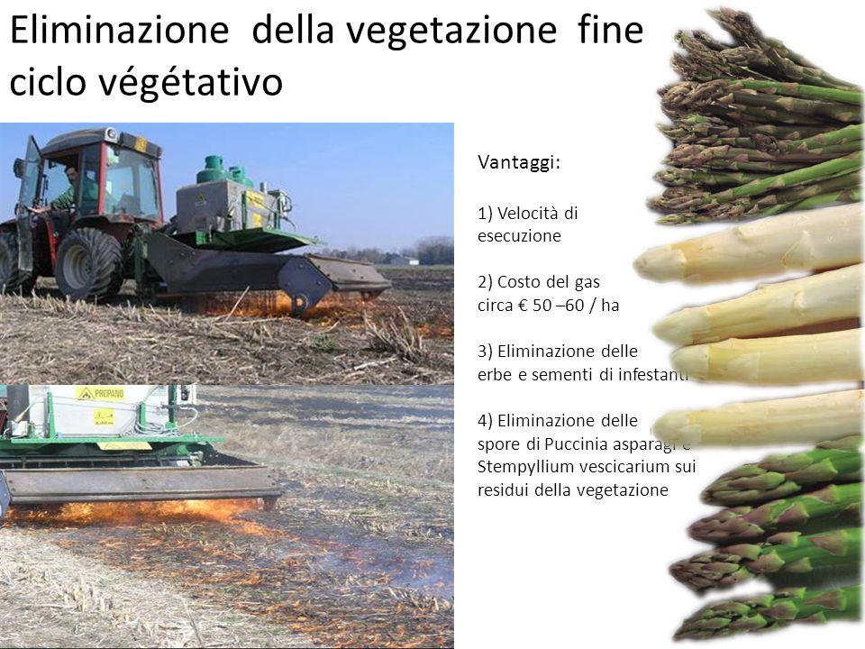 Eliminazione della vegetazione fine ciclo végétativo