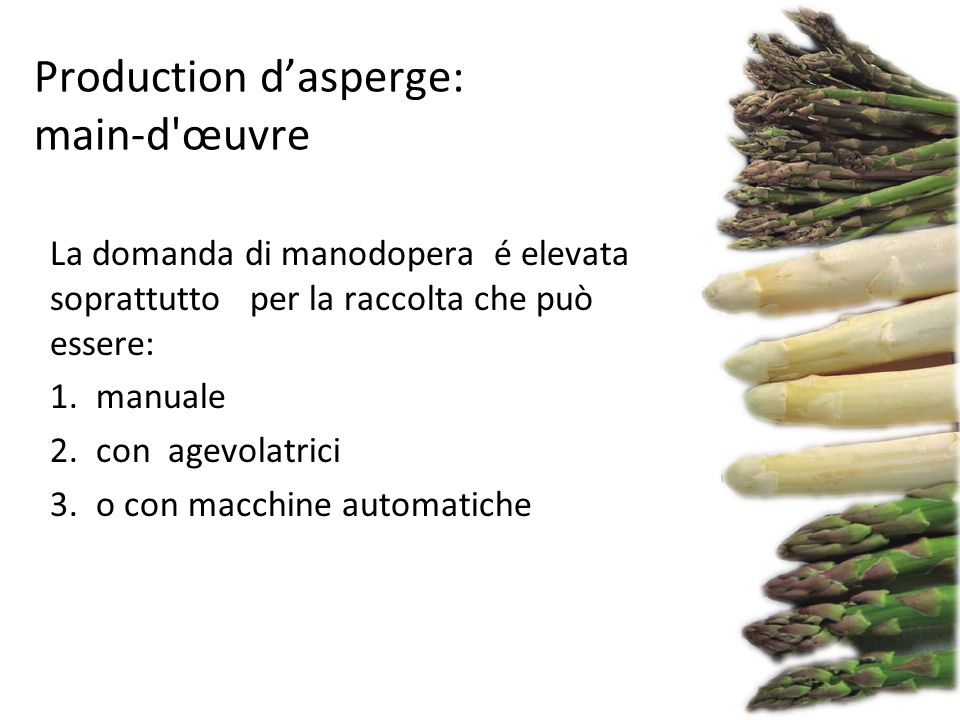 Production d'asperge: main-d œuvre