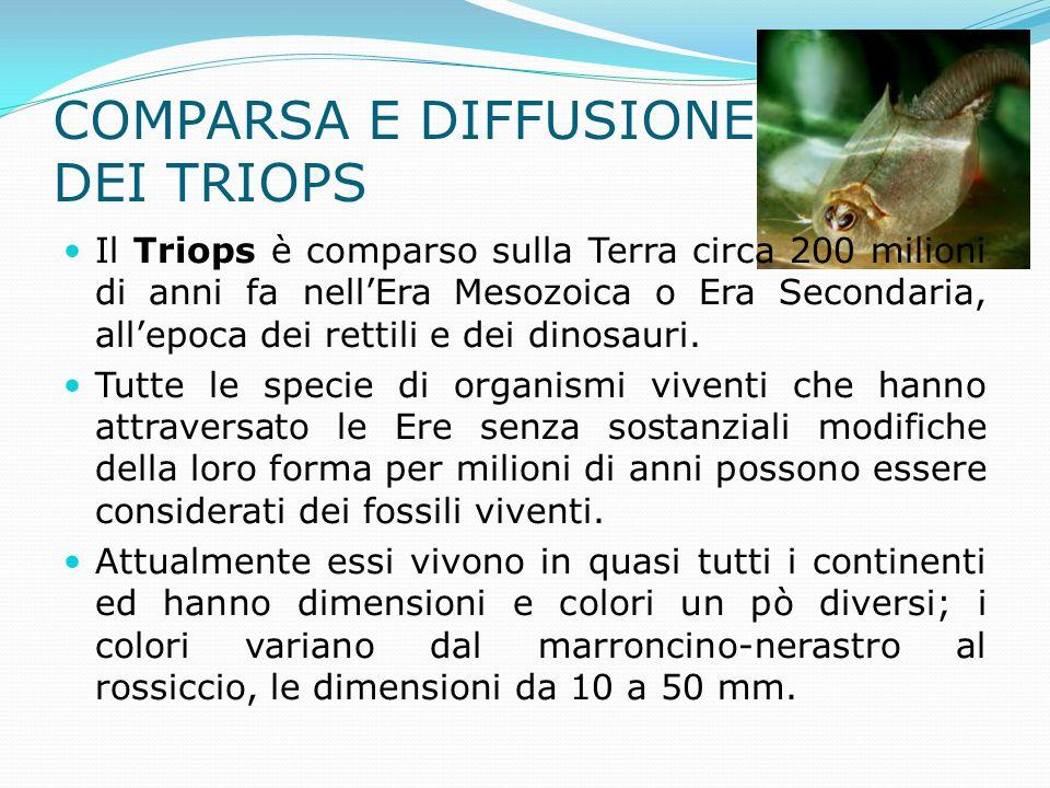 COMPARSA E DIFFUSIONE DEI TRIOPS