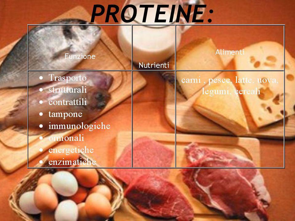 PROTEINE: Sono abbondandi nella carne, pesce, latte, uova, legumi, cereali.