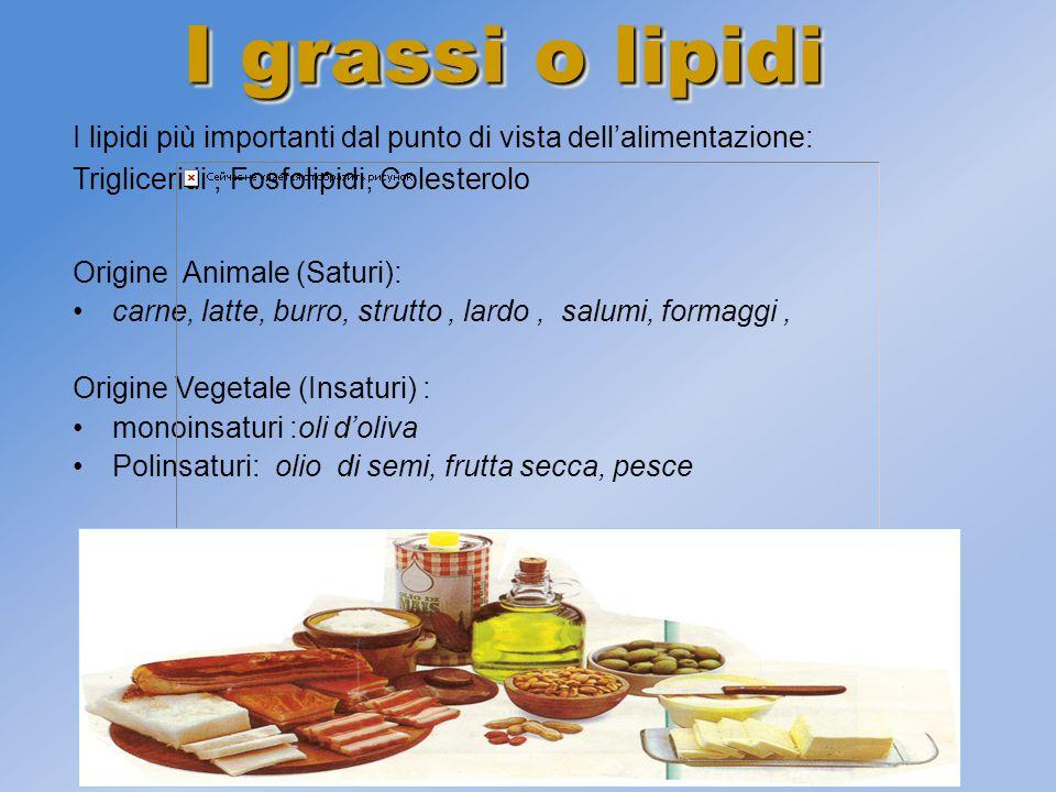 I grassi o lipidi I lipidi più importanti dal punto di vista dell'alimentazione: Trigliceridi , Fosfolipidi, Colesterolo.