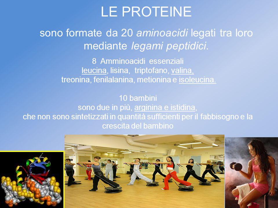 LE PROTEINE sono formate da 20 aminoacidi legati tra loro mediante legami peptidici. 8 Amminoacidi essenziali.