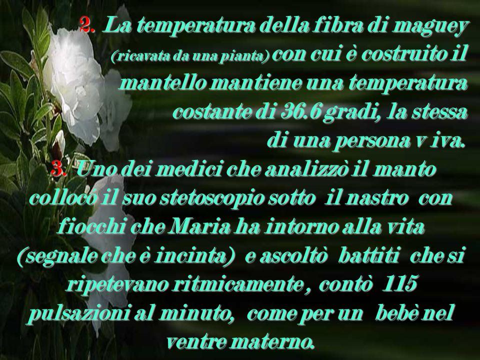 2. La temperatura della fibra di maguey (ricavata da una pianta) con cui è costruito il