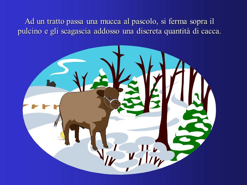 Ad un tratto passa una mucca al pascolo, si ferma sopra il pulcino e gli scagascia addosso una discreta quantità di cacca.