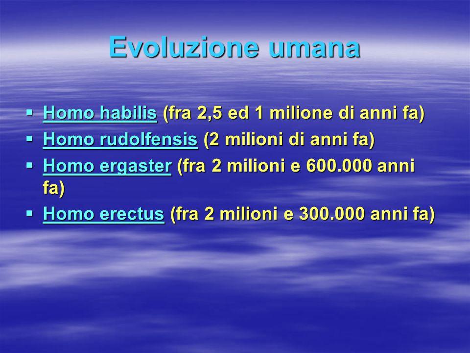 Evoluzione umana Homo habilis (fra 2,5 ed 1 milione di anni fa)
