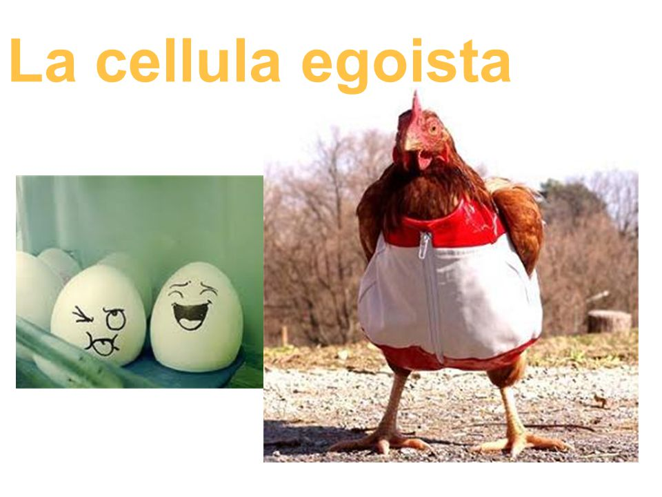 La cellula egoista