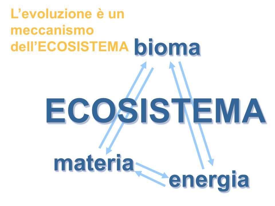 ECOSISTEMA bioma materia energia