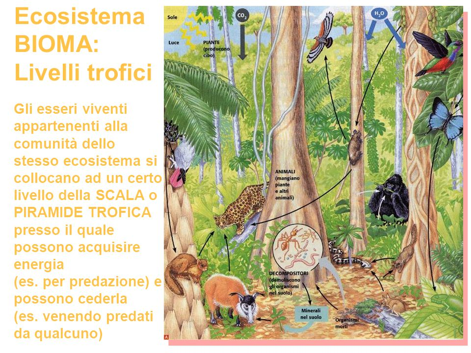 Ecosistema BIOMA: Livelli trofici