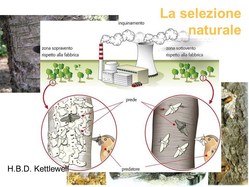La selezione naturale H.B.D. Kettlewell