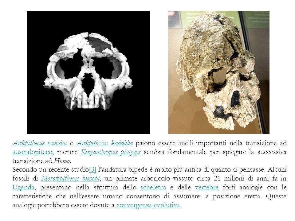 Ardipithecus ramidus e Ardipithecus kadabba paiono essere anelli importanti nella transizione ad australopiteco, mentre Kenyanthropus platyops sembra fondamentale per spiegare la successiva transizione ad Homo.