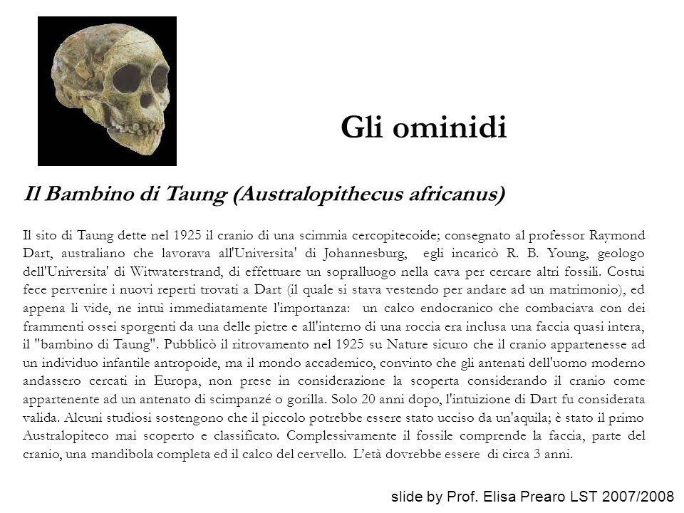 Gli ominidi Il Bambino di Taung (Australopithecus africanus)