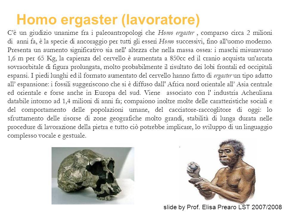 Homo ergaster (lavoratore)