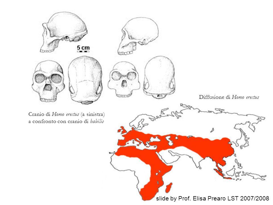 Diffusione di Homo erectus