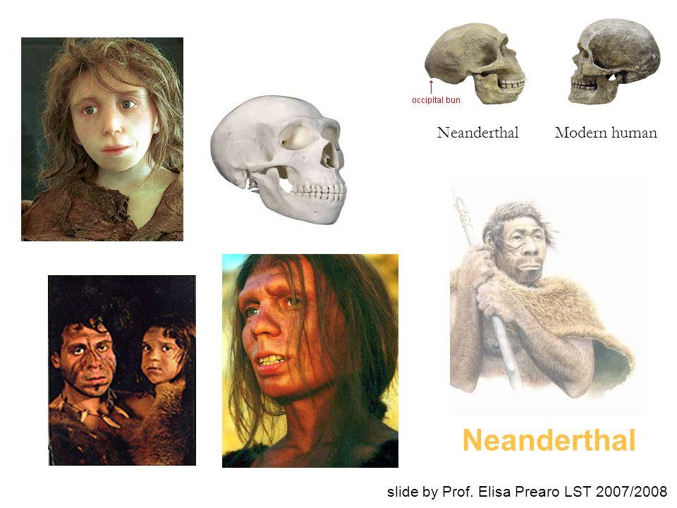 Neanderthal Neanderthal Modern human