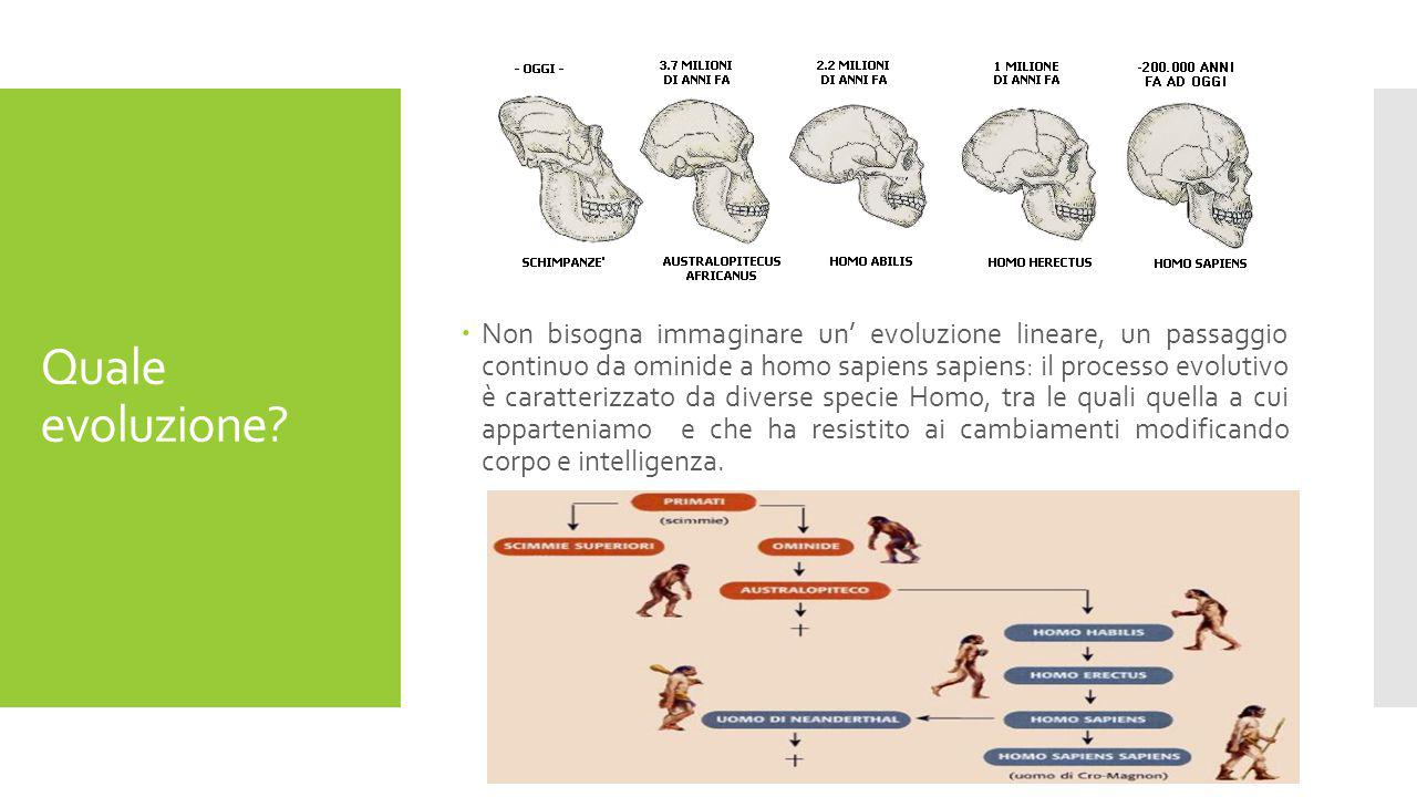 Non bisogna immaginare un' evoluzione lineare, un passaggio continuo da ominide a homo sapiens sapiens: il processo evolutivo è caratterizzato da diverse specie Homo, tra le quali quella a cui apparteniamo e che ha resistito ai cambiamenti modificando corpo e intelligenza.