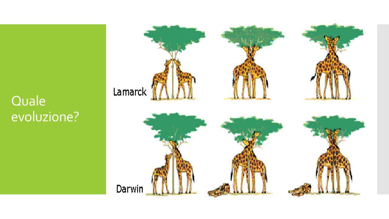 Quale evoluzione