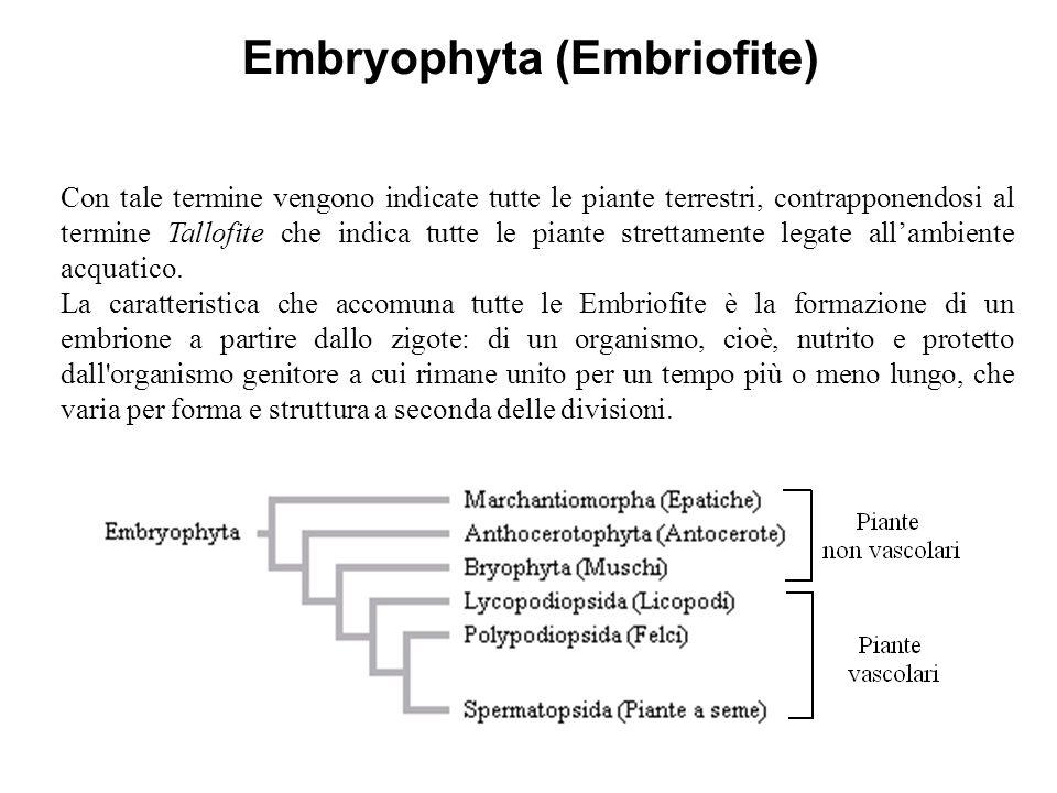 Embryophyta (Embriofite)