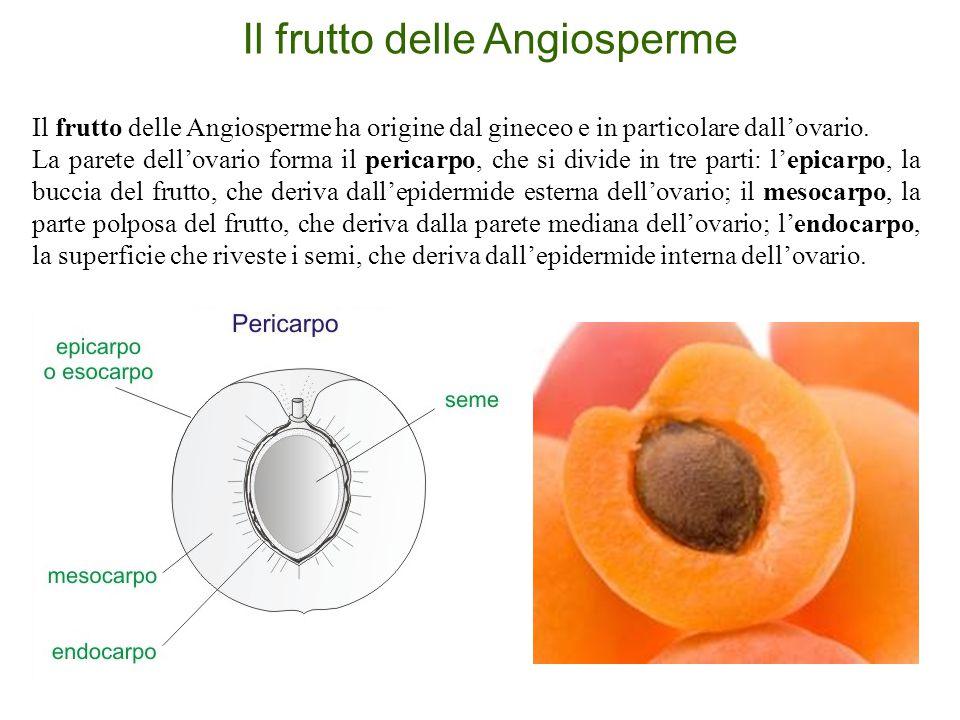 Il frutto delle Angiosperme