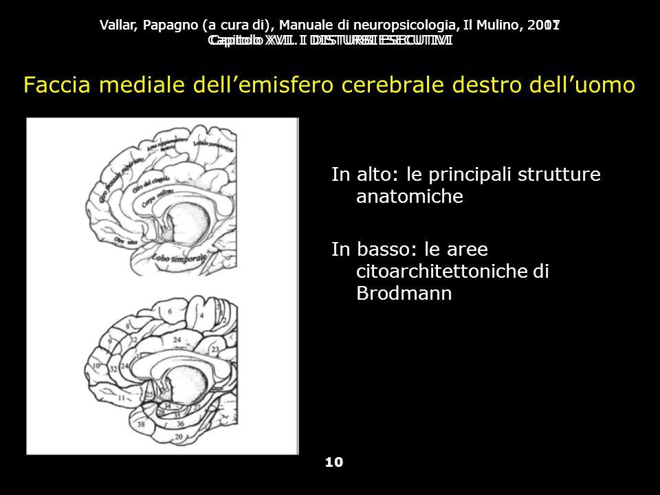 Faccia mediale dell'emisfero cerebrale destro dell'uomo