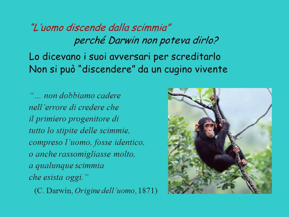 perché Darwin non poteva dirlo