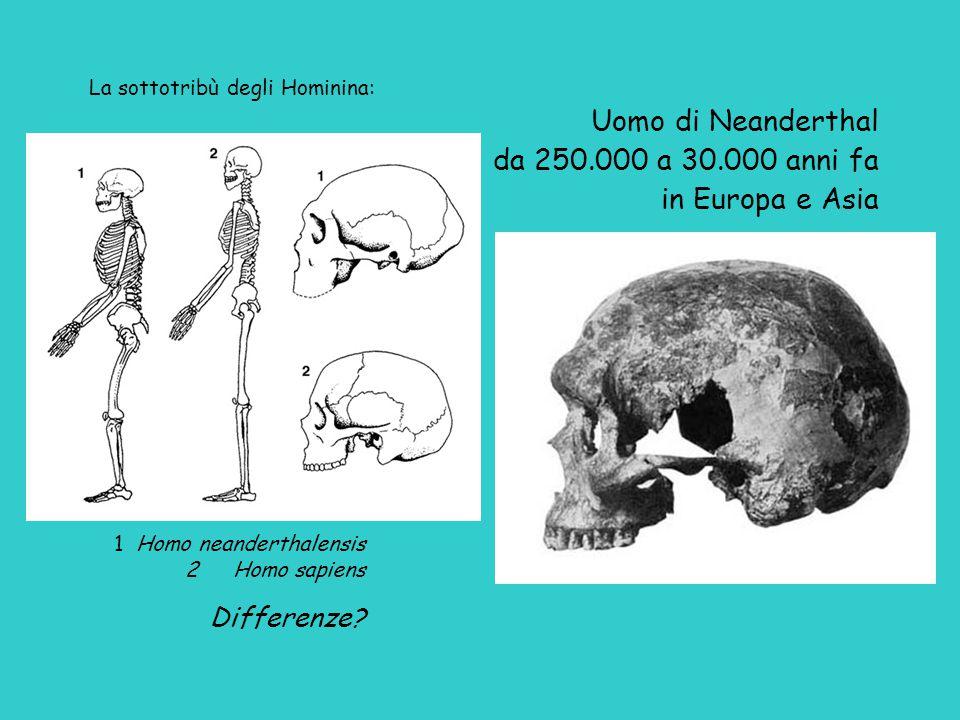 Uomo di Neanderthal da 250.000 a 30.000 anni fa in Europa e Asia