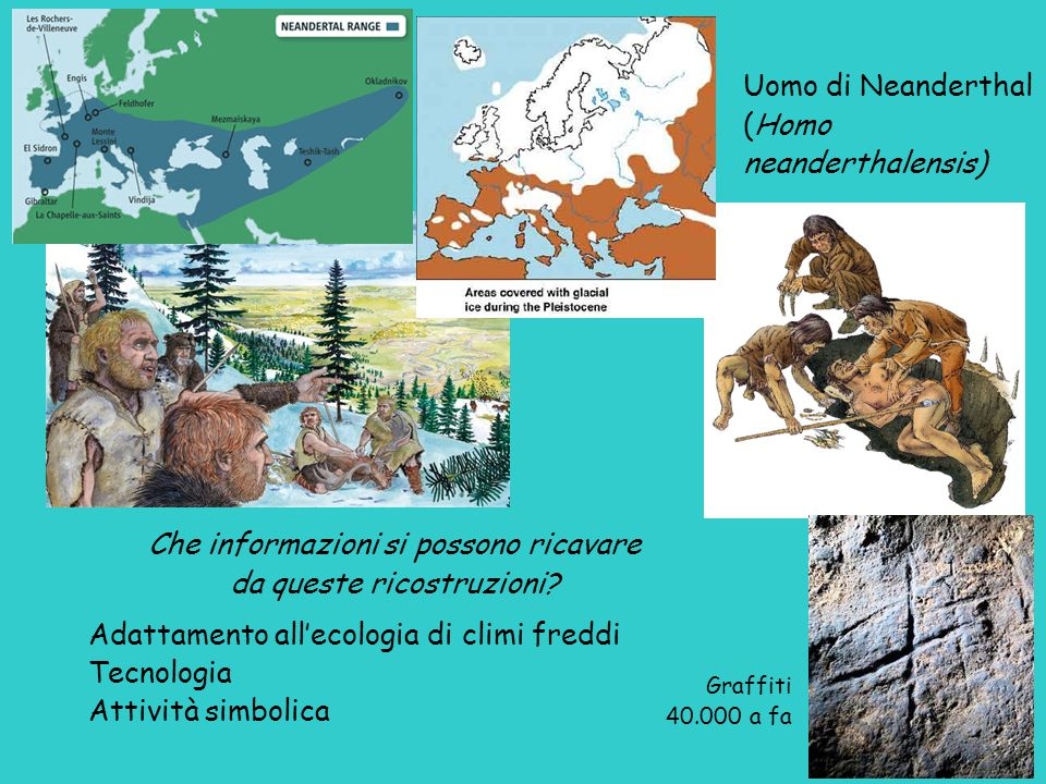 (Homo neanderthalensis)