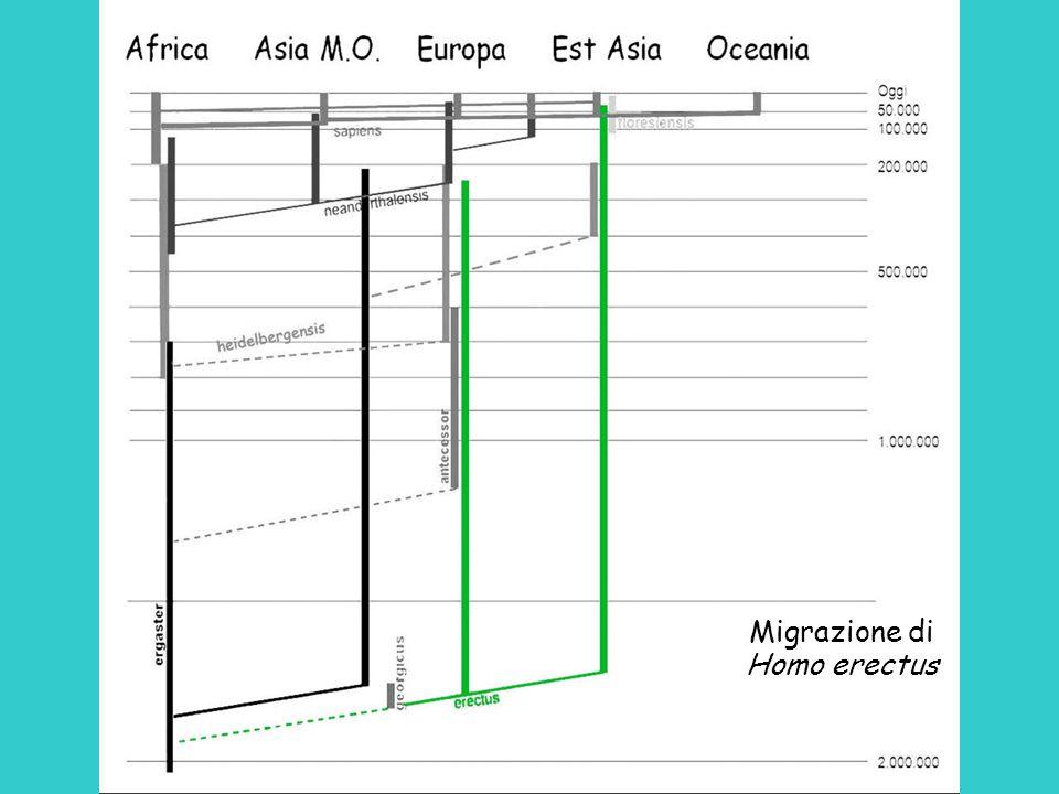 Migrazione di Homo erectus