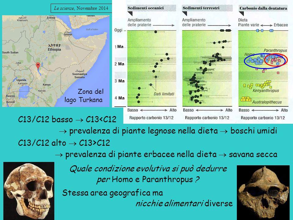  prevalenza di piante legnose nella dieta  boschi umidi
